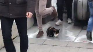 【海外の反応】通勤ラッシュの地下鉄出入口で暖を取る?!「ゆずらない野良猫」
