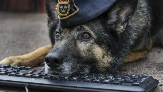 【海外の反応】可愛いと評判のスウェーデン警察公式ウェブサイト「404エラーページ」
