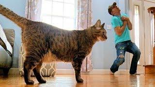 【海外の反応】猫の前で死んだふりをしてみた