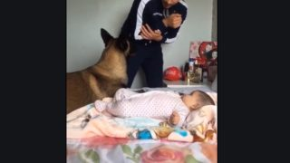 【海外の反応】愛犬自慢「赤ちゃんを守ってくれる頼もしいうちの犬をご覧ください」