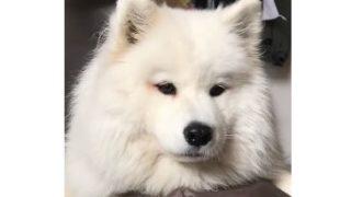 【海外の反応】犬に野菜を食べさせる方法「犬にブロッコリーをあげても大丈夫なの?」
