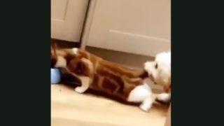 【海外の反応】「僕のエサを食べるな!」猫VS犬、最終決戦勃発か?!
