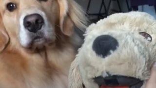 【海外の反応】ニセモノを始末しようとする犬