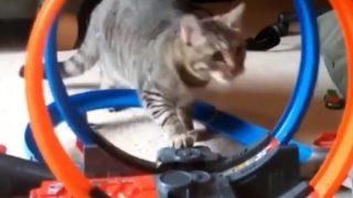 【海外の反応】猫を夢中にさせる「世界一速いミニカー」