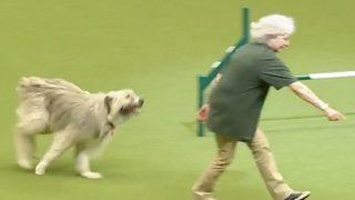 【海外の反応】『出来の悪い犬ほどカワイイ』ことを思いっきり証明した犬
