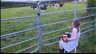 【海外の反応】アイルランドの少女が奏でるアコーディオンの音色に魅了された牛たち