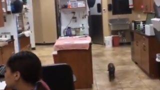 【海外の反応】驚愕のジャンプテクニックを駆使して愛用のベッドを独り占めするネコ
