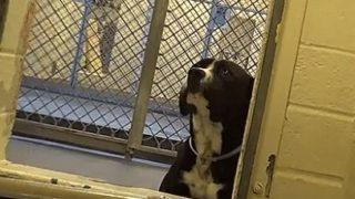 【海外の反応】死に直面した犬に訪れた至福の時…