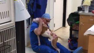 【海外の反応】火災に巻き込まれ瀕死の重傷を負った犬、「命の恩人」と再会を果たす