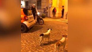 【海外の反応】イタリアの広場で暮らす、ちょっと迷惑なワンコたち