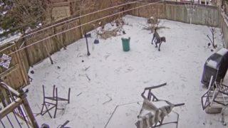 【海外の反応】監視カメラが捉えた「愛犬めがけて木が倒れる瞬間」