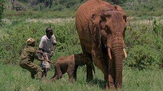 【海外の反応】我が子を押しつぶす危機に直面したアフリカゾウ