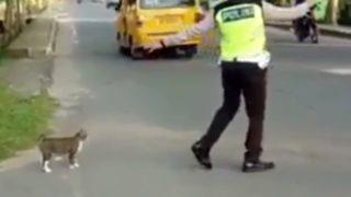 【海外の反応】インドネシアの交通警官、野良猫の道路横断を助ける