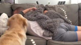 【海外の反応】ソファーの上で抱き合うカップルの隙間に強引に割り込もうとする犬