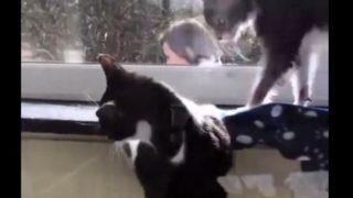 【海外の反応】「人間よ、これが猫の友情だ!」