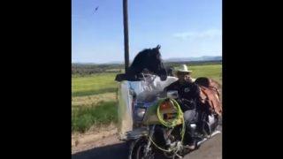 """【海外の反応】「これぞ人馬一体!?」愛馬専用の""""ミニマムな""""輸送車両"""