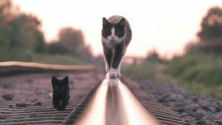【海外の反応】メチャカッコいい!イカす猫動画