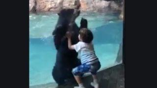 【海外の反応】爆笑・子供と一緒に垂直跳びを繰り返すメガネグマ