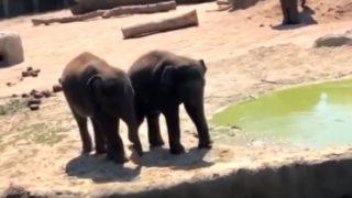 【海外の反応】ゾウの兄弟「ママには言えない危険な遊び」