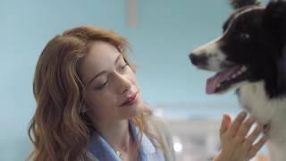 【海外の反応】野良犬との出会いと別れを描いた泣かせるコマーシャル