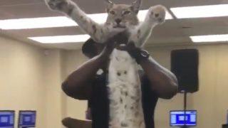 【海外の反応】ものすごく長~い猫