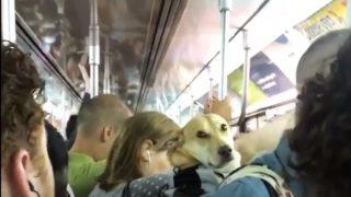 【海外の反応】通勤電車で経験した「最も奇妙なアイコンタクト」