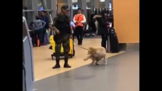 【海外の反応】空港で警備活動中に、パートナーに気まずい思いをさせてしまう警察犬