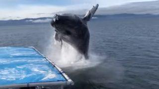 【海外の反応】30トン級のクジラに海のもくずにされかけた観光客のみなさん