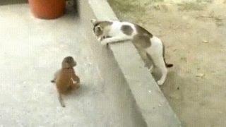 【海外の反応】ペットとは思えないほど自由に遊ぶ猫とサル