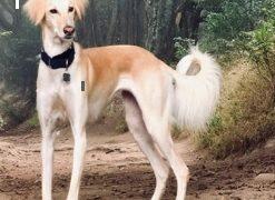 【海外の反応】あまりにも出来が良すぎて「ニセモノ呼ばわり」された愛犬のスナップ写真