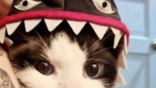 【海外の反応】あまりにも可愛いコスプレ姿の愛猫と片時も離れたくなかった女性