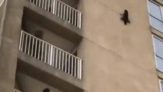 【海外の反応】高層アパートの壁にしがみつくスパイダーマンみたいな動物の正体
