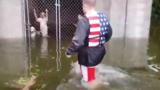 【海外の反応】ハリケーンでケージに閉じ込められた犬たちを救出するアメリカン・ヒーロー