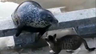 【海外の反応】種の違いを超えて放たれた、「伝説的猫パンチ」