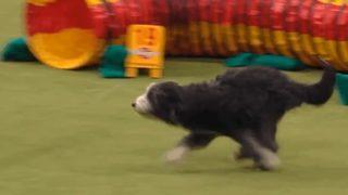 【海外の反応】愛犬がコンテストで披露した、訓練の成果よりも大切なもの…