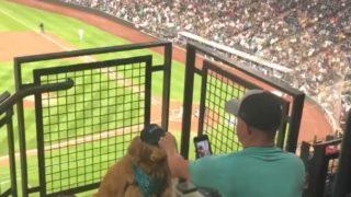 【海外の反応】ご主人様のインスタ投稿のために野球場でホットドッグをくわえるけなげなワンコ