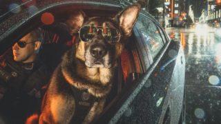 【海外の反応】カナダ・バンクーバー警察の「警察犬カレンダー」がヤバい…