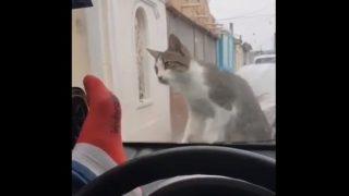 【海外の反応】「後悔先に立たず…」駐車中の車内から猫を驚かそうとした男の場合