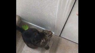 【海外の反応】自らすすんで問題解決にあたるデキる猫