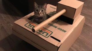 【海外の反応】猫用段ボール~上級者編