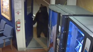 【海外の反応】アメリカクロクマ、警察署に押し入る