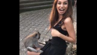 【海外の反応】バリ島で女性観光客に忍び寄る「ちょっと危ない」カニクイザル