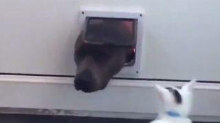 【海外の反応】「ワンコ、通るべからず」ペット用ドアを封鎖するニャンコ