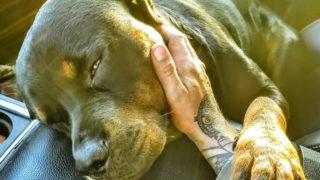 【海外の反応】愛犬との絆を見事に捉えた感動の一枚…