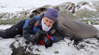 【海外の反応】動物写真家のお姉さんに甘える、ゾウアザラシの子供たち…