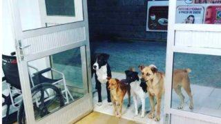 【海外の反応】ブラジルで緊急入院したホームレスを見舞う野良犬たち…