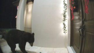 【海外の反応】「クマ、あっち行け!」クリスマス飾りを破壊するクロクマに懇願する悲しきお父さん…