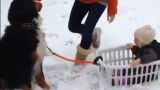 生れて初めての犬ぞり体験…