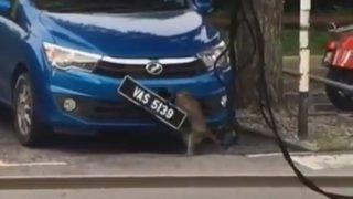 【海外の反応】「犯罪性ゼロ」カメラが捉えたナンバープレート盗難現場