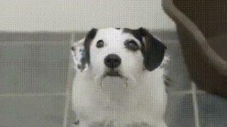 【海外の反応】保護犬ハーヴィーの面白コマーシャル
